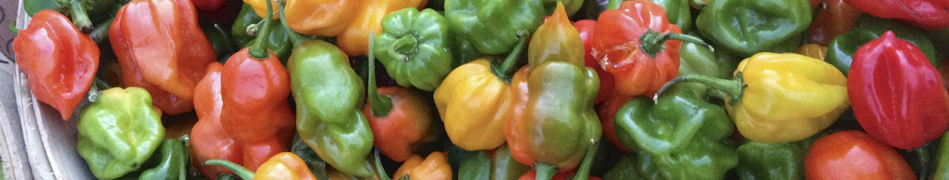 Chile Peppers Bounty | PKWay