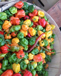 Chile Peppers | PKWay